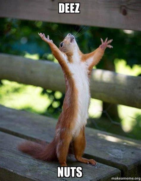 Squirrel Nuts Meme - deez nuts happy squirrel make a meme