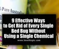 Most Effective Way To Get Rid Of Bed Bugs