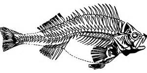 kostenlose vektorgrafik fisch barsch skelett
