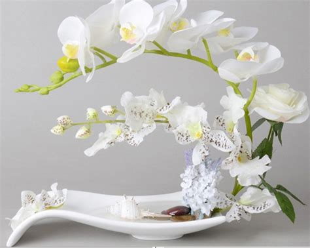 Pot Keramik Untuk Anggrek buy grosir vas untuk anggrek phalaenopsis from