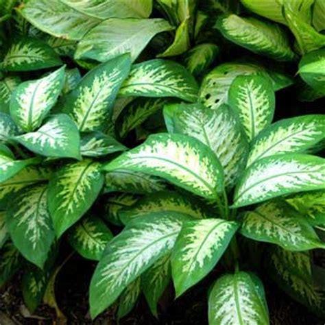 poisonous house plants etonnant z back