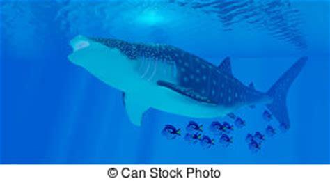 balena alimentazione plancton illustrazioni e clip 242 plancton