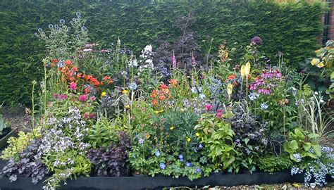 Cottage Plants by Awards Jelly Cottage Plants