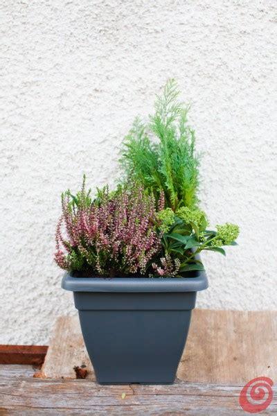 fioriere per davanzali giardino e terrazzo le composizioni invernali casa e trend