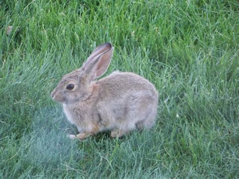 City Bunny Country Bunny by Colorado Manreach 187 Types 187 2008 Forest