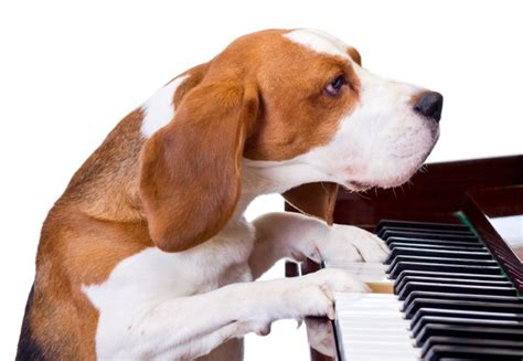 songs for dogs mozart for puppies calming dogs with classical cpr