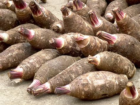 Winter Root Vegetable Recipes - mystery superfood highlight taro root