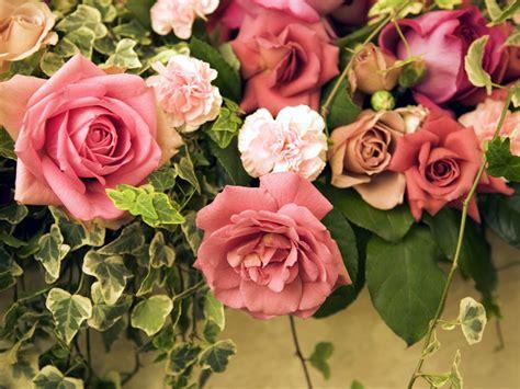 wallpaper desktop flowers rose rose buds wallpapers free download wallpaper dawallpaperz