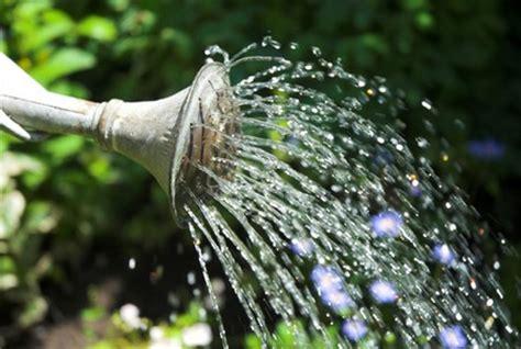 how often water vegetable garden best way to water a vegetable garden