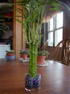 Cny Home Decor houseplant care guides lucky bamboo 101