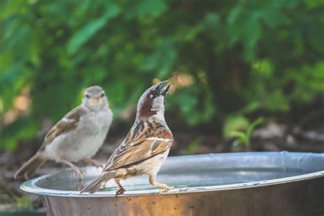keep birds porch how do i keep birds my porch how to keep birds my