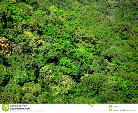 tree tops aerial view of tree tops 28 images aerial view of