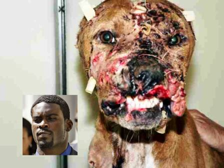 michael vick dogs yes killer michael vick owns a