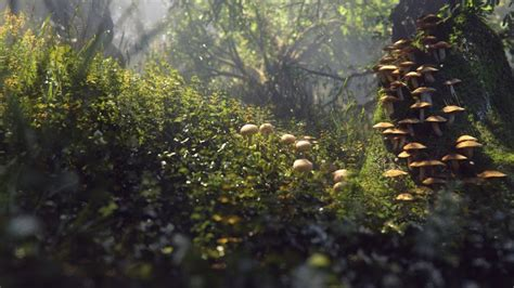 render forest cgtalk lighting challenge 31 the enchanted forest