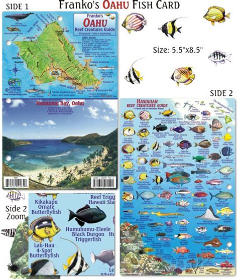 the ultimate guide to hawaiian reef fishes sea turtles 1000 images about hawaii fish cards on pinterest