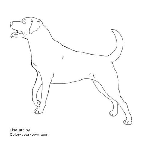 coloring pages of black lab puppies black lab coloring pages