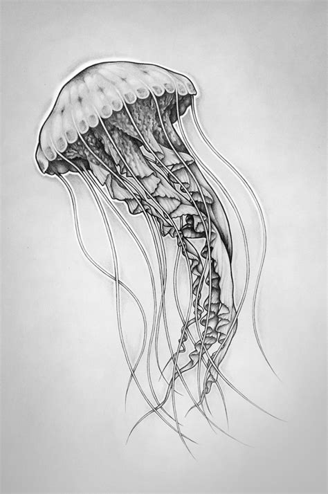 Drawing Jellyfish by Fh 246 Bik Jellyfish By Fh 246 Bik Artwork Via Behance