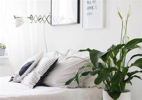 zimmerpflanze schlafzimmer besser schlafen mit der pflanze des monats pretty