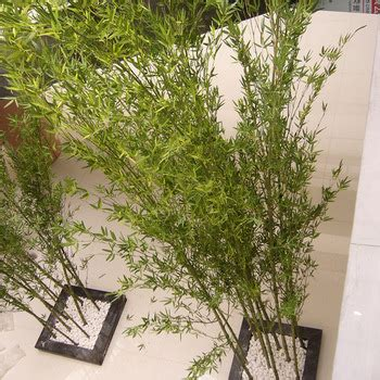 artistic greenery buy quality artificial flowers trees best quality indoor artificial bamboo plants for sale