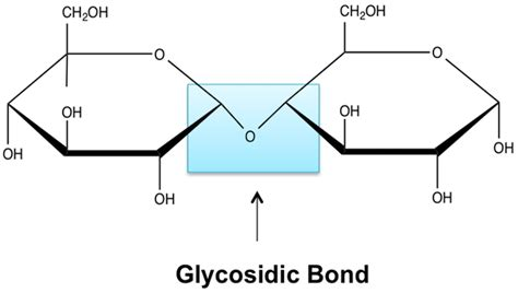 n linked carbohydrates definition glycosidic linkage definition overview lesson