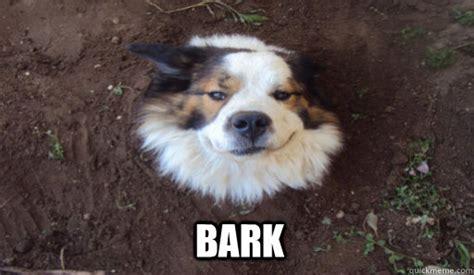 Barking Dog Meme - bark tree dog quickmeme