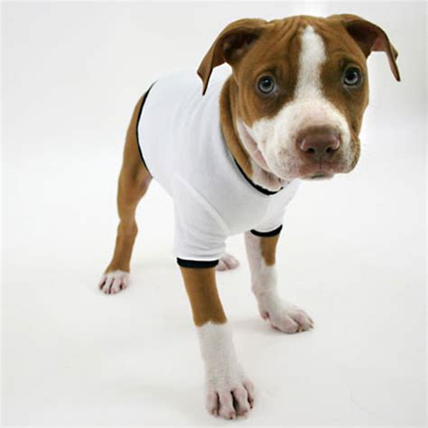 shirts for dogs t shirt gt friendfeed