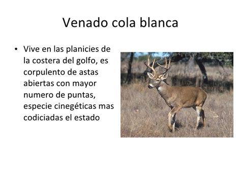 es un gnero con alrededor de 110 especies de la familia de las animales en peligro de extinci 243 n en nuevo le 243 n