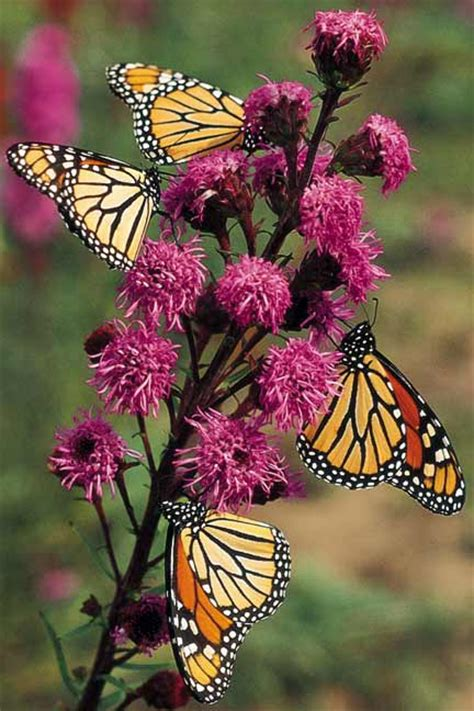 gardening for butterflies butterfly garden a delight