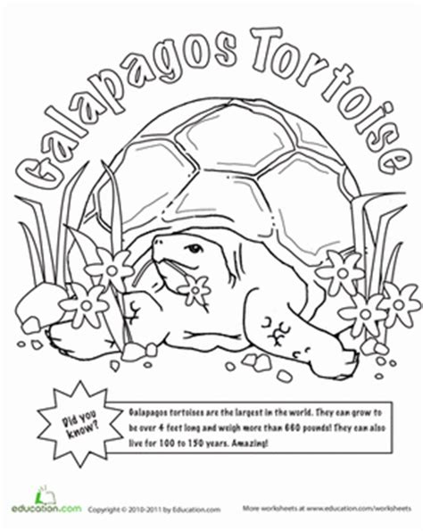galapagos penguin coloring page galapagos islands animals coloring pages from galapagos