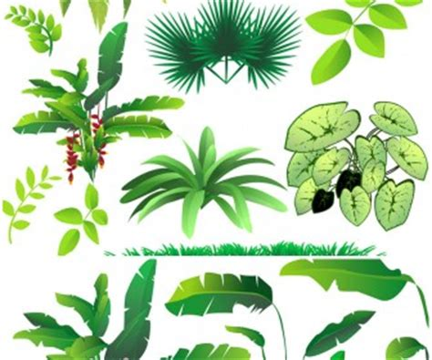 Rainforest Tree Template trees vector graphics