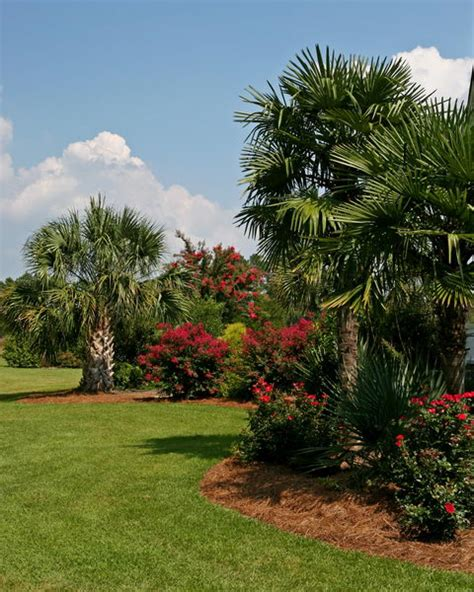 price of trees for landscaping 28 images buy sylvester palm trees for sale in orlando