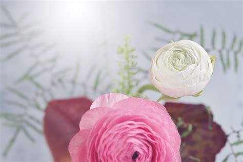 gambar wallpaper bunga mawar pink gudang wallpaper