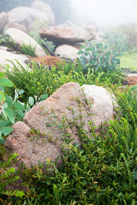 Rocks In The Garden Rocks In The Garden Don S Tips Rocks In The Garden Burke S Backyard Make A Rock Garden That
