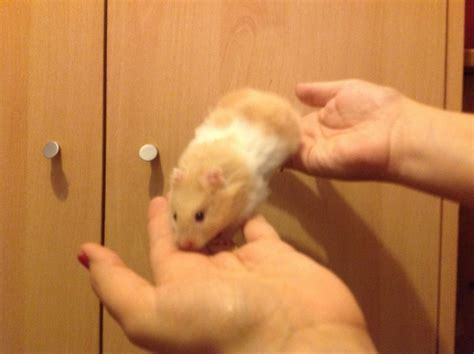 baby hamsters Quotes