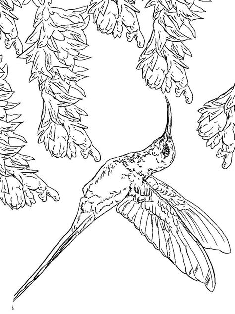 Hummingbird Coloring Page by Hummingbird Coloring Pages And Print Hummingbird