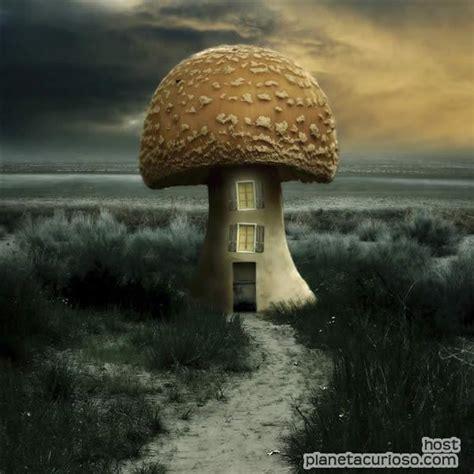 imagenes surrealistas libros im 225 genes de lo m 225 s surrealistas planeta curioso