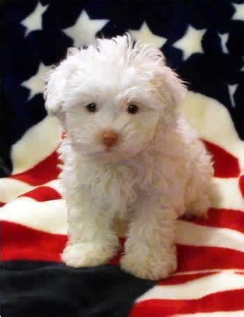 patriotic puppy links we