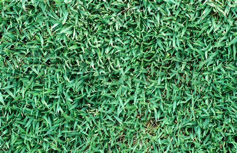 couch grass varieties queensland blue couch suncoast turf supplies