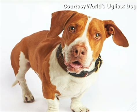 worlds dogs walle crowned world s ugliest really ktla