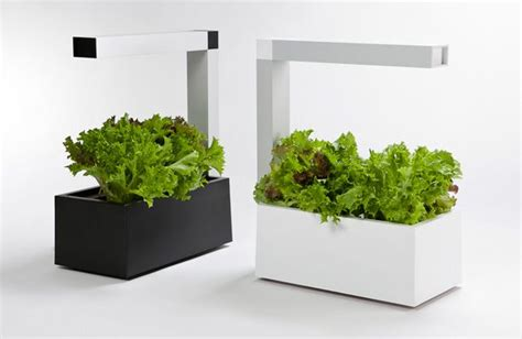 indoor herb garden apartment using a combination of hydroponics and intensive energy