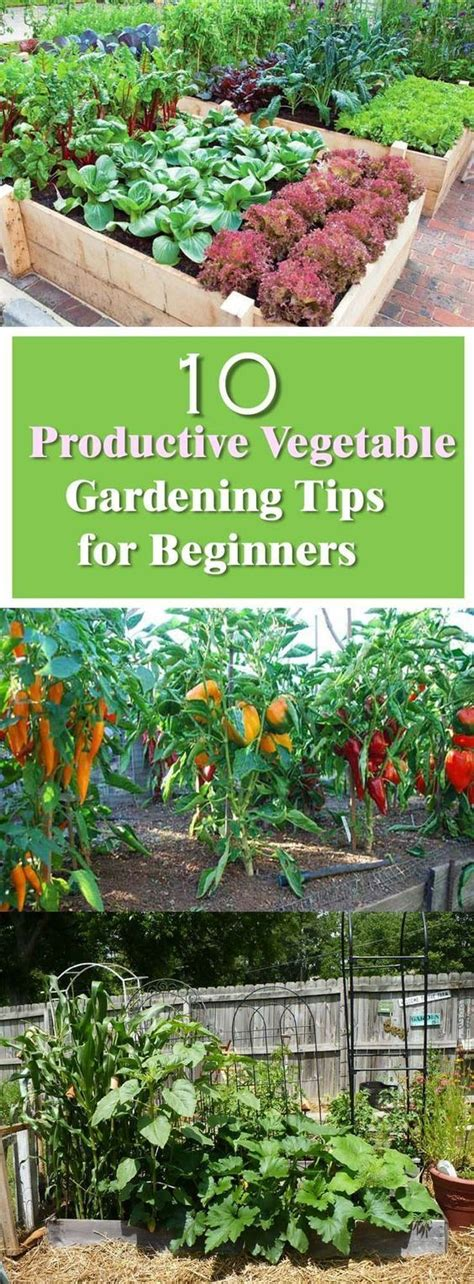 Beginner S Guide For Productive Vegetable Garden Vegetable Gardens For Beginners