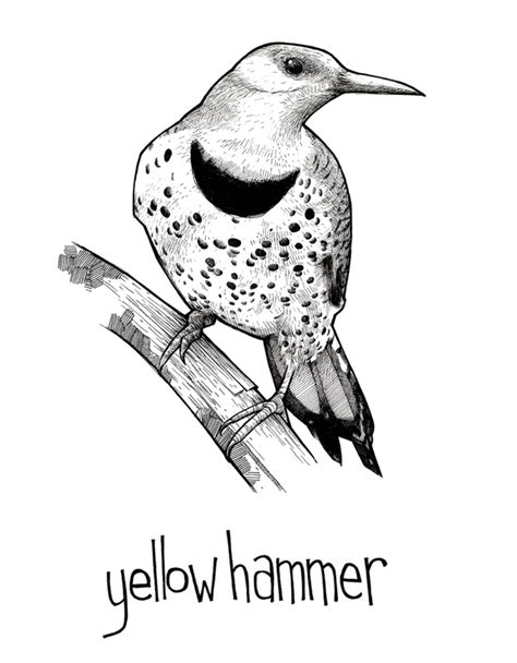 yellowhammer coloring page free northern flicker coloring pages