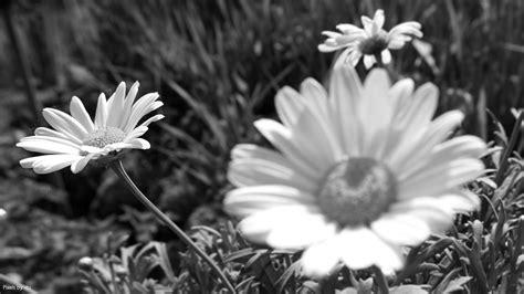 schwarz fotografie artikel und bilder mit dem tag schwarz wei 223 fotografie