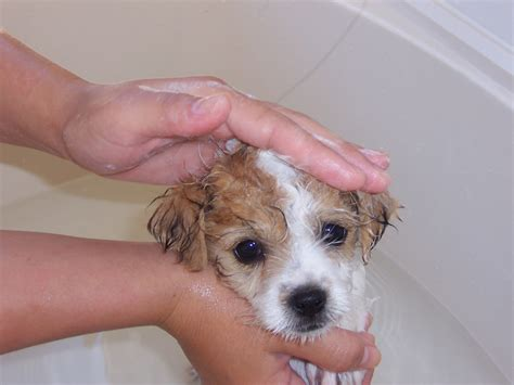 ticks in bathroom dog lover s dog blog tick repellent for dogs 10 proven