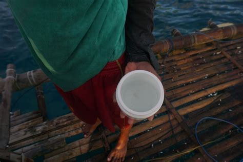 Bibit Lobster fokus liputan larangan penangkapan lobster permen pahit bagi nelayan lombok bagian 1