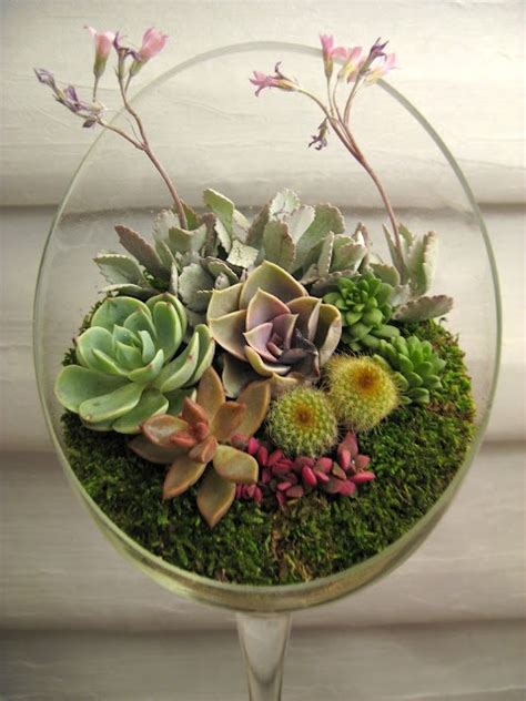 succulent arrangements very pretty succulent arrangement in a unique glass
