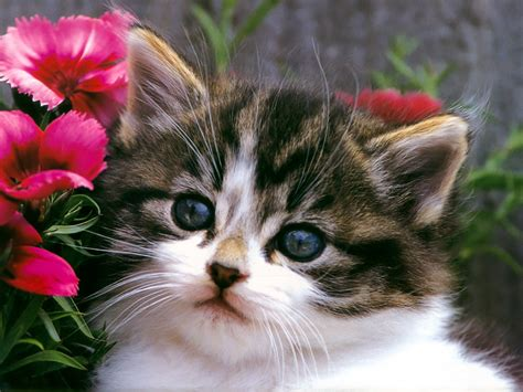 i love cats cute cat kitten pictures cute cat kittensplaying cats wallpapers cute cat and kitten cats