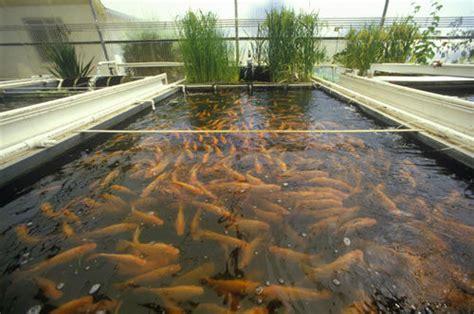 Small Fish Farm In Home Lebanese Aquaculture Make A Living Through Fish Farming