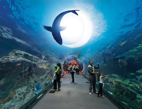 5 things to do when you are in dubai fantoosy