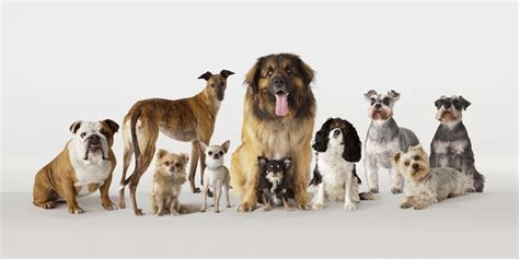 different dogs which breed of is the smartest